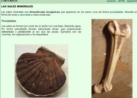Sales minerales | Recurso educativo 755240