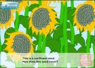How do seeds travel (Video Lesson) | Recurso educativo 765762